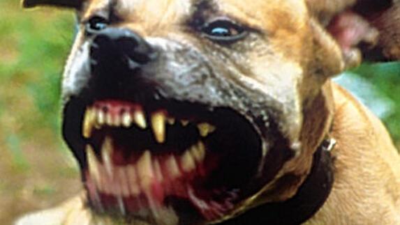 67cd37a440d3af94c4f76ff6a2615cf1-pitbull_gevaarlijke_hond.aa189515.jpg