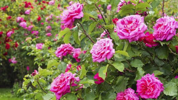 Bloem En Tuin : Een zoektocht bij de bloementuin in kessel l1